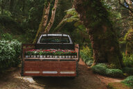 Potted plants on the back of a truck in a forest out in nature - INGF00071