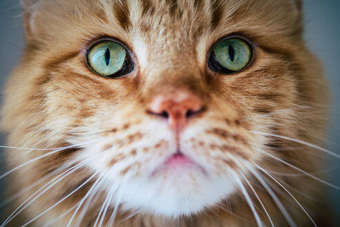 Close-up portrait of a cat - INGF00098