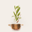 Still life studio shot of a pot and leaves against a white background - INGF00159