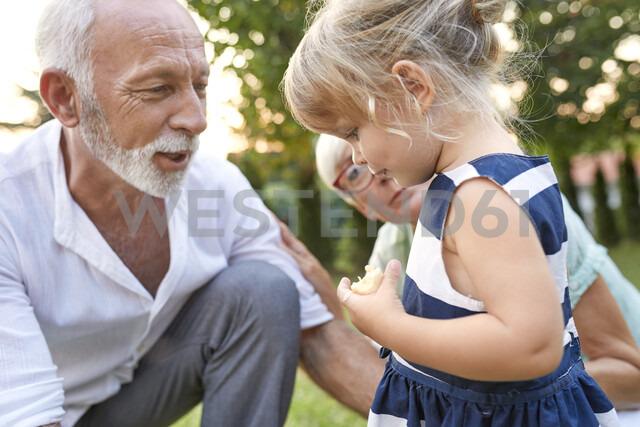 Grandparents with granddaughter in garden - ZEDF01688