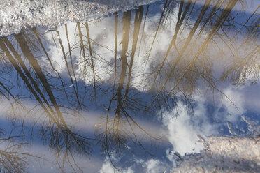 Germany, Brandenburg, Treuenbrietzen, Forest after forest fire, mirroring in puddle - ASCF00899