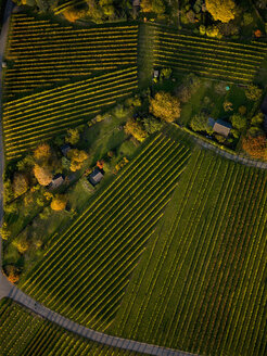 View from above textured green farmland crops - FSIF03218