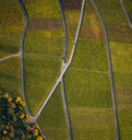 View from above textured green farmland crops - FSIF03221