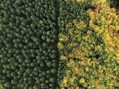 Aerial view green treetops turning color in autumn, Donaueschingen, Baden-Wuerttemberg, Germany - FSIF03239