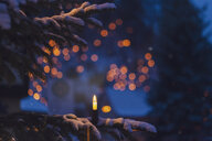 Lighted electric candle on snow-covered fir branch - MMAF00616