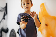 Little boy holding toy spider - JRFF01896