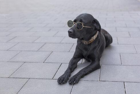 Black dog lying on pavement wearing sunglasses - JUNF01528