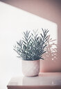 Close-up nature scene of potted plants on a table - INGF00467
