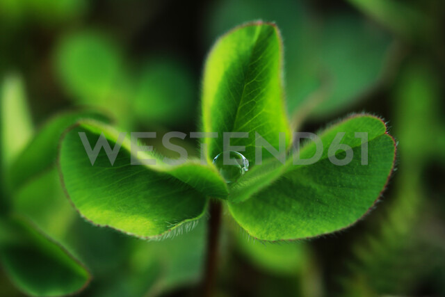 Close-up of a green leafy plant - INGF00767