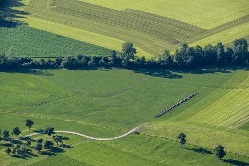 Austria, Salzburg State, meadows - HAMF00449