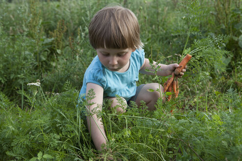 Girl harvesting carrots in vegetable garden - FSIF03338