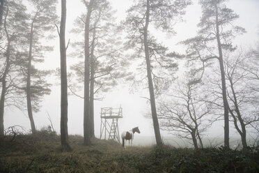 Horse standing in foggy forest - FSIF03371