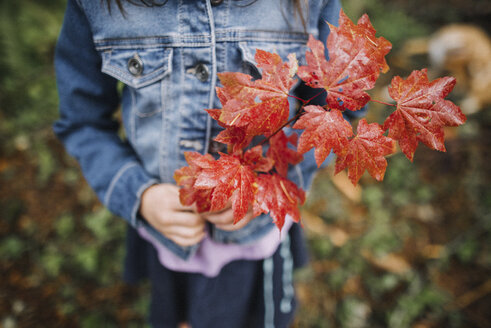 Midsection of girl holding maple leaves while standing at park during autumn - CAVF49123