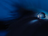 Close-up of a water droplet in selective focus - INGF01810