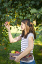 Smiling girl picking apple from tree - LVF07480