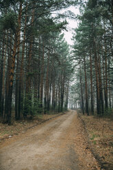 Empty forest track through pines - VPIF00923