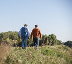 Two old friends taking a stroll through the fields, talking about old times - UUF15457
