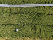 Aerial view of green landscape - CAVF50024