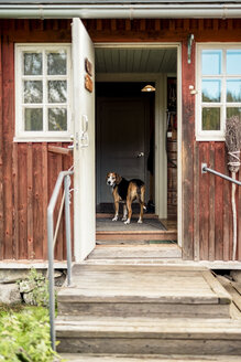 Dog standing at opened door in holiday home looking outside - PSIF00121