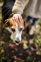 Little girl's hand on dog's head in autumnal garden - PSIF00124