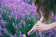 Girl with tattoos picking lavender close-up - INGF02943