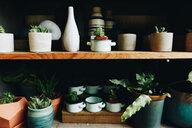 Potted plants on shelf - INGF03006
