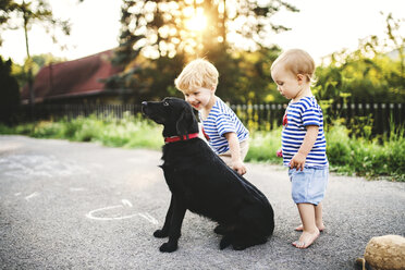 Toddler and his little sister playing with dog outdoors - HAPF02787