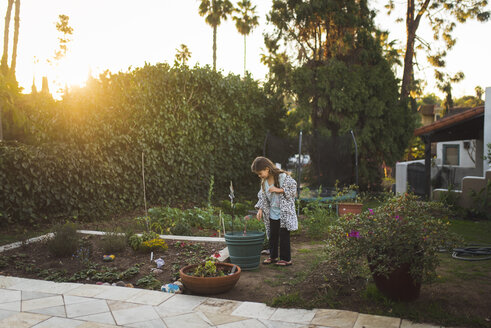 Girl looking at plant while standing in yard during sunset - CAVF51097