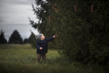 Cute baby boy standing by pine tree on field at park - CAVF51121