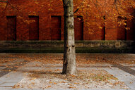 An isolated tree in the city during autumn in Berlin - INGF03610