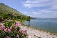 Albania, Shkoder, Lake Skadar, Village Shiroke - SIEF08063