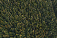 Aerial view of trees growing at Reunion island - CAVF52049