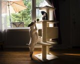 Side view of dog looking at kitten sitting on rack in living room - CAVF52148