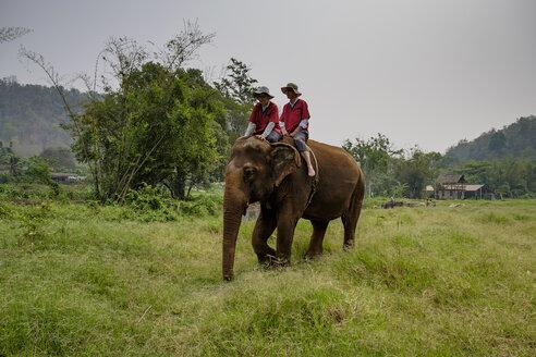 Thailand, Chiang Mai province, Ran Tong Elephant Sanctuary, Elephant trekking - HLF01135