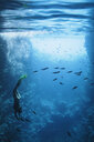 Young woman snorkeling underwater among fish, Vava'u, Tonga, Pacific Ocean - HOXF04145