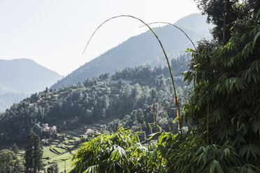 Sunny scenic view, Supi Bageshwar, Uttarakhand, Indian Himalayan Foothills - HOXF04151