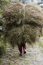Man carrying bundles of grass, Supi Bageshwar, Uttarakhand, Indian Himalayan Foothills - HOXF04172