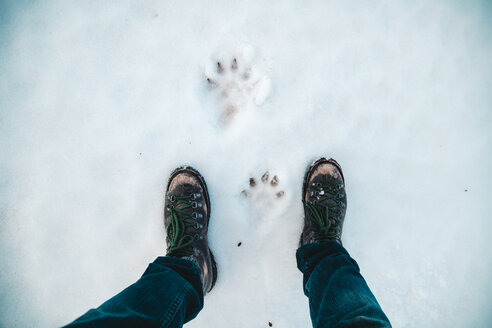 Low section of man standing by paw prints on snow covered field - TGBF00436