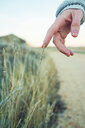 Close-up of hand holding wheat in field - INGF05363