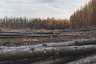 Germany, Brandenburg, Treuenbrietzen, Forest, slash and burn - ASCF00904