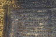 Germany, Brandenburg, Treuenbrietzen, Forest, Aerial view of slash and burn - ASCF00907