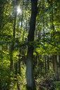 Germany, Bavaria, Upper Bavaria, Karra near Bernried, Beech forest - LBF02150