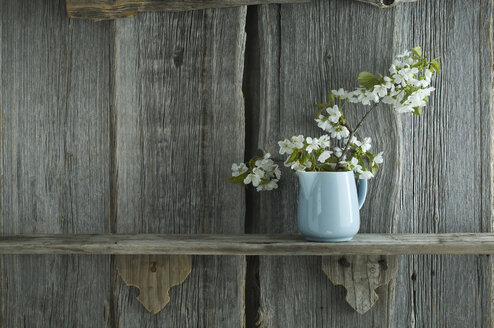 Twig of cherry blossoms in jar in front of rustic wooden wall - ASF06241
