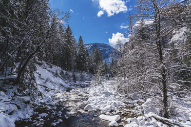 Stream flowing through snow covered rocks in forest at Yosemite National Park during winter - CAVF52350