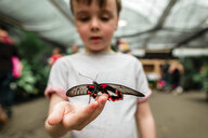 Curious boy holding butterfly - CAVF52575