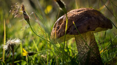 Close-up of a natural mushroom growing in the forest - INGF05530