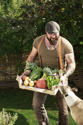 Mature man carrying crate with vegetables in his garden - REAF00383