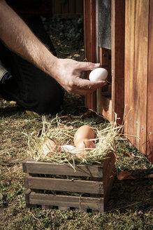 Hand holding hen's egg - REAF00425