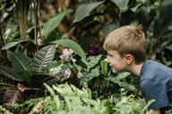 Boy looking at butterfly on plant at greenhouse - CAVF52716