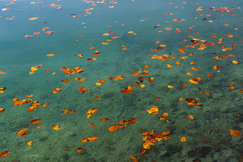 Alatsee with autumn leaves - STSF01791